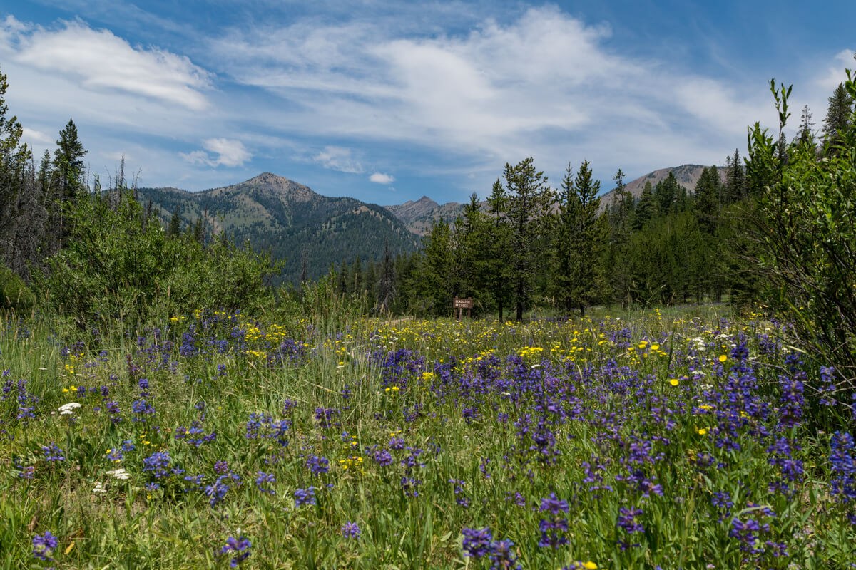 Wild Flowers in Sun Valley