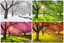 Tree in Winter, Spring, Summer, and Fall