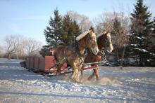 Sleigh Ride In Sun Valley